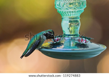Hummingbird and feeder.  Side view of hummingbird's sitting on a bird feeder. - stock photo