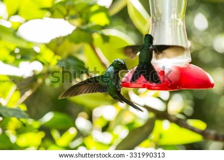Hummingbird drinking from a container of sweet liquid - stock photo