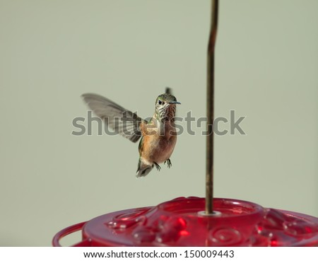 Hummingbird flying towards a red bird feeder preparing to land with a blurred background - stock photo