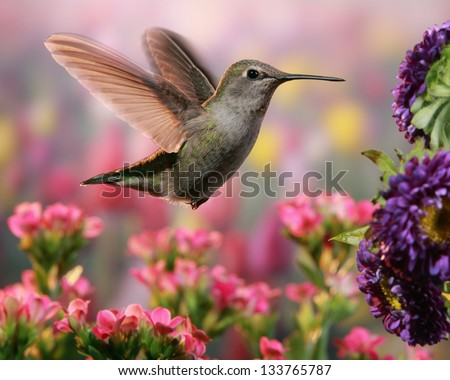 Hummingbird in colorful garden - stock photo
