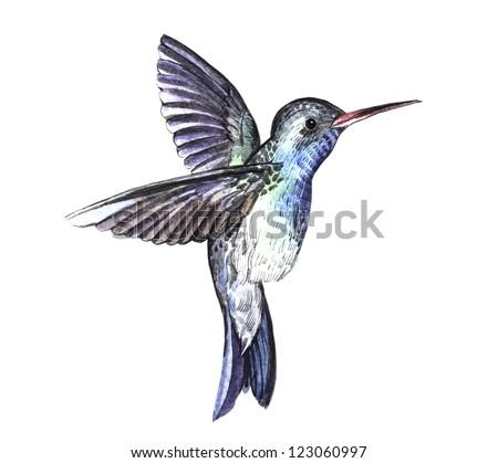 Hummingbird watercolor sketch - stock photo