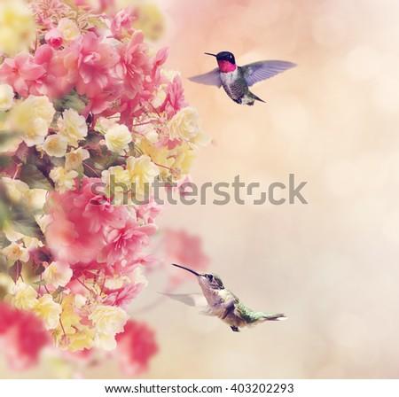 Hummingbirds in Flight Around Flowers - stock photo