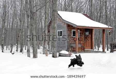 Humorous image of a cute toy poodle running through the snow, with a squirrel running away in the background, and a cute chickadee on the roof of the playhouse in the woods. - stock photo