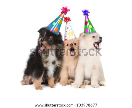 Humorous Puppies Singing the Happy Birthday Song Wearing Silly Hats - stock photo
