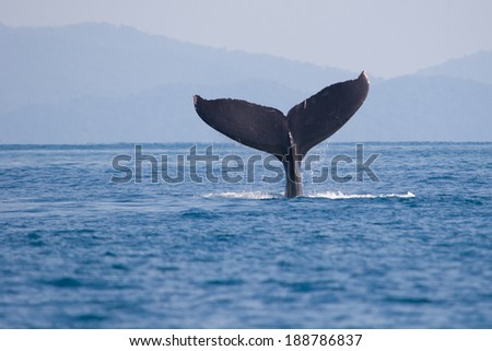 Humpback whale fin - stock photo