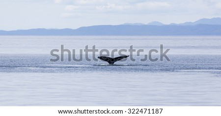 Humpback whale tail in Johnstone strait, Vancouver island, British Columbia, Canada - stock photo