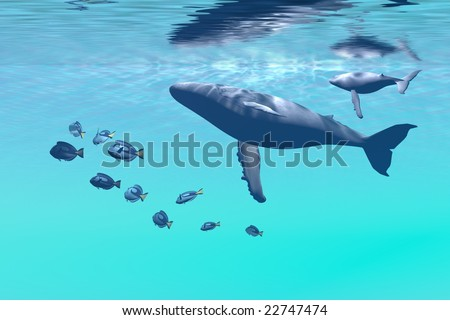 HUMPBACK WHALES - Mother and calf swimming near the surface. - stock photo