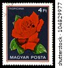 """HUNGARY - CIRCA 1982: A stamp printed in Hungary shows a rose with the inscription """"Tropicana"""", from the series """"Flowers"""", circa 1982 - stock photo"""
