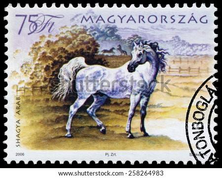 HUNGARY - CIRCA 2006: A stamp printed in Hungary shows hungarian horse, circa 2006 - stock photo