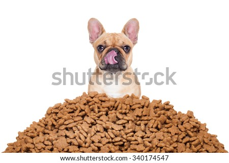 hungry  bulldog dog behind a big mound or cluster of food , isolated on white background - stock photo