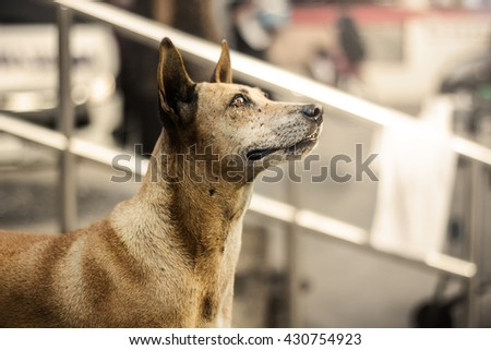 Hungry dog with the eyes that feel piteous.Focus at dog. - stock photo