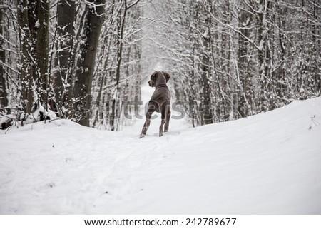 Hunter - stock photo