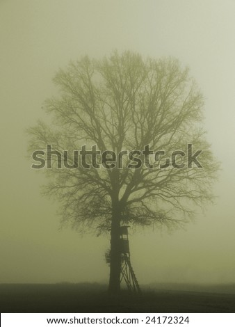 Hunting blind at a misty morning - stock photo