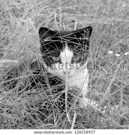 Hunting cat - stock photo