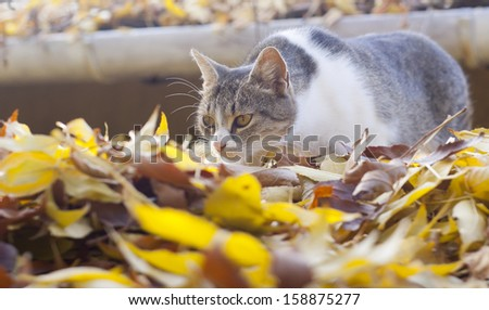 Hunting cat with a beautiful autumn background - stock photo