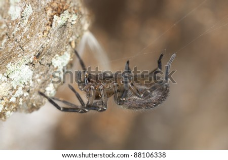 Hunting spider sitting in spiderweb, extreme close-up with high magnification - stock photo