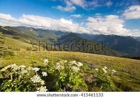 Hurrcane Ridge at Olympic National Park - stock photo