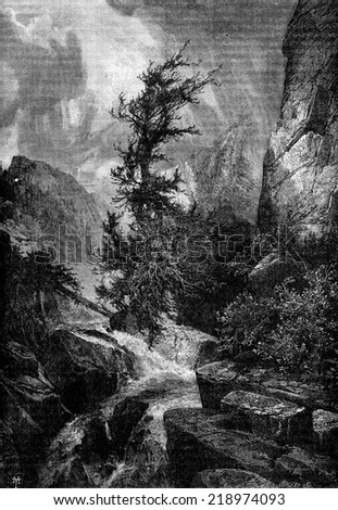 Hurricane. The largest cedars were twisted by the force of the wind, vintage engraved illustration. Journal des Voyages, Travel Journal, (1880-81). - stock photo
