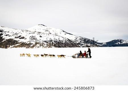 Huskies and malamutes pull dog sled riders along Alaska glacier  - stock photo