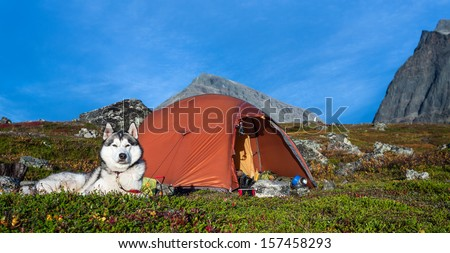 Husky and Tent in Lapland - stock photo