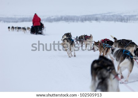 Husky Dogsleds racing in snow - stock photo