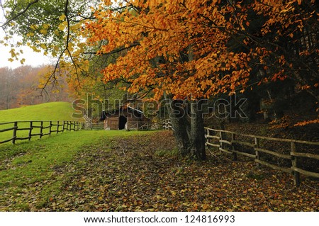Hut beside a forest - stock photo
