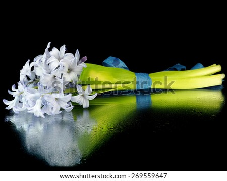 Hyacinth flowers on a black background with water drops  - stock photo