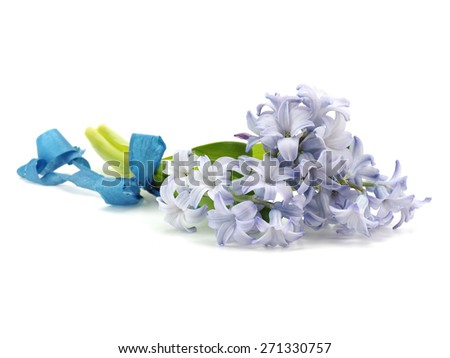 Hyacinth flowers on a white background   - stock photo