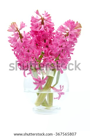 hyacinths in glass vase isolated on white background - stock photo