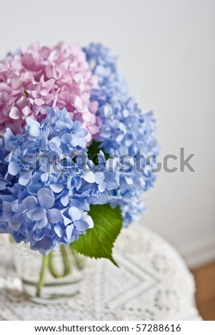 hydrangea flowers - stock photo