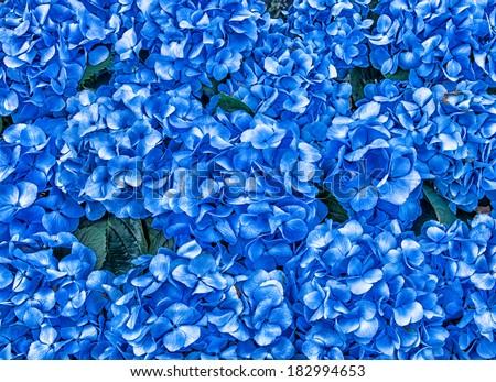 Hydrangea Flowers Background - stock photo