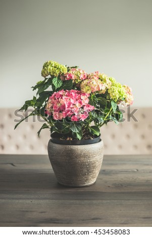 Hydrangea flowers in pot on dinning table in living room, home decoration and interior, retro toned - stock photo