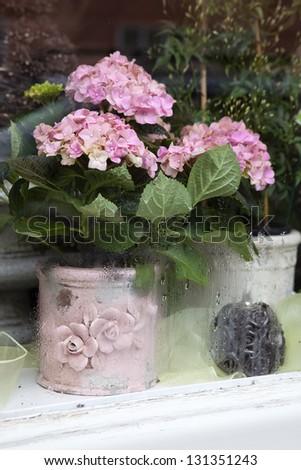 hydrangea in window of shop - stock photo