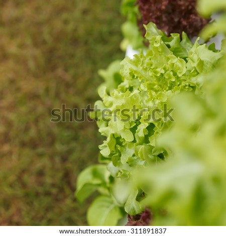 Hydroponics method of growing plants in water without soil.  - stock photo