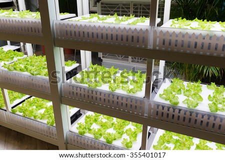 Hydroponics rack - stock photo