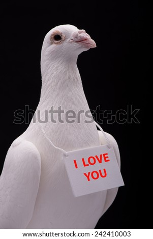 I love you. Beautiful white dove message - I love you. - stock photo