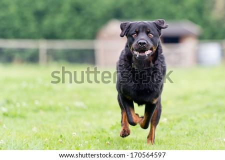 I'm coming - stock photo