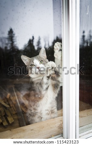 I want to go out !!! - stock photo
