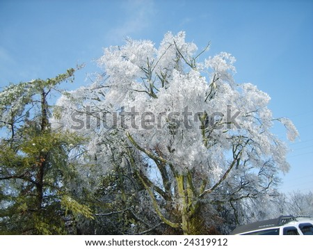 Ice capped tree in Paducah. This is the day the ice started to thaw. - stock photo