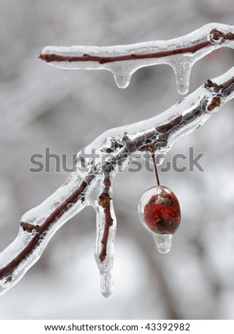 Ice covered berry - stock photo