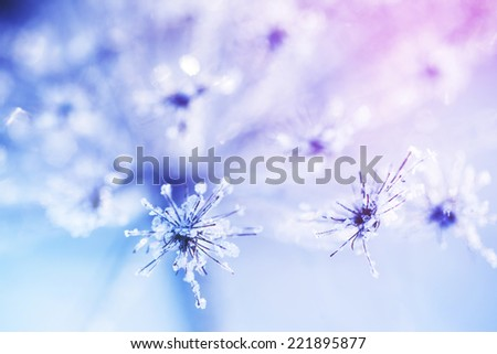 Ice covered plant closeup - stock photo