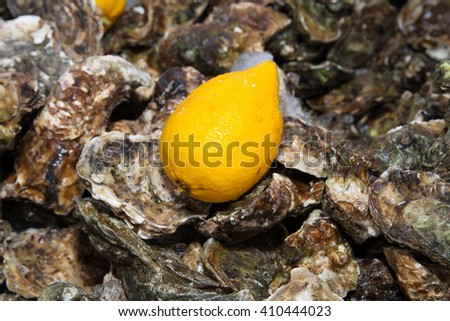 ice lemon oysters  - stock photo