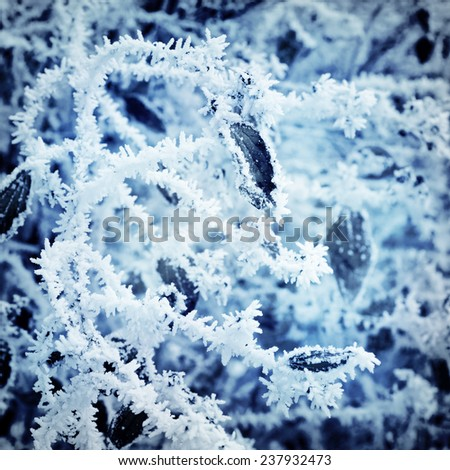ice on a tree in winter - stock photo