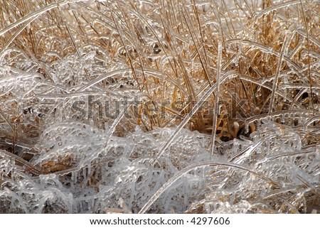 Ice on plants - stock photo