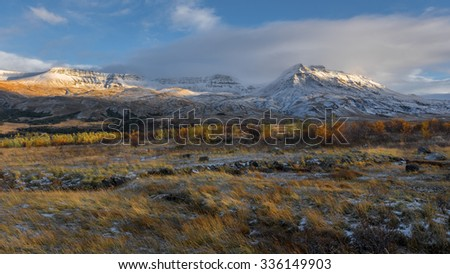 Iceland, Beautiful arctic landscape, wild field with bright yellow grass and moss and distant black hills against the background of blue sky - stock photo