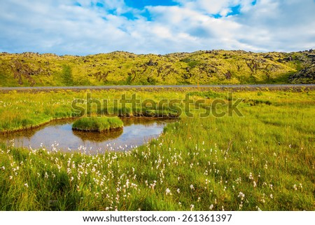 Iceland in July. Lovely pond with thermal water. On small island grows tall grass - stock photo