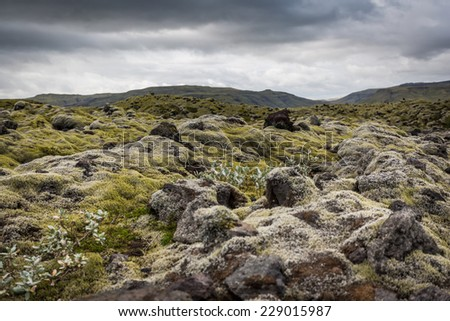Iceland, moss and musk landscape in a typical cloudy day - stock photo