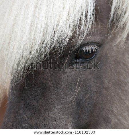 Icelandic horse, closeup eye - stock photo