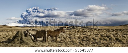 icelandic horse in front of volcano - stock photo