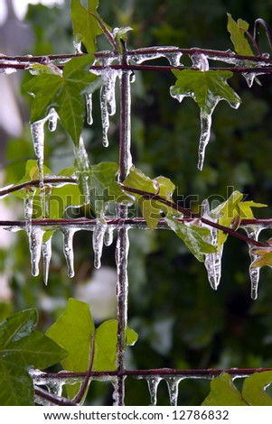 Icicles on leaves - stock photo